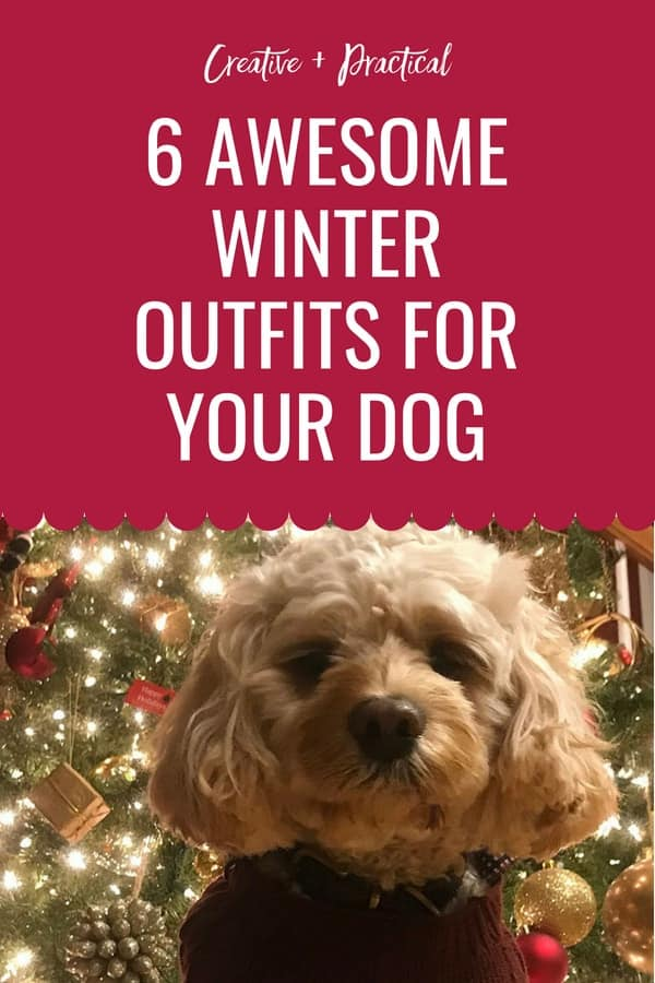 6 Awesome outfits for your (boy) dog. Dressing your dog for winter is essential in cold climates. But dressing for winter isn't everything, find some adorable outfits that will be perfect for your dog's next photoshoot. #dog #cutedog #cockapoo #dogsclothing #clothingfordogs