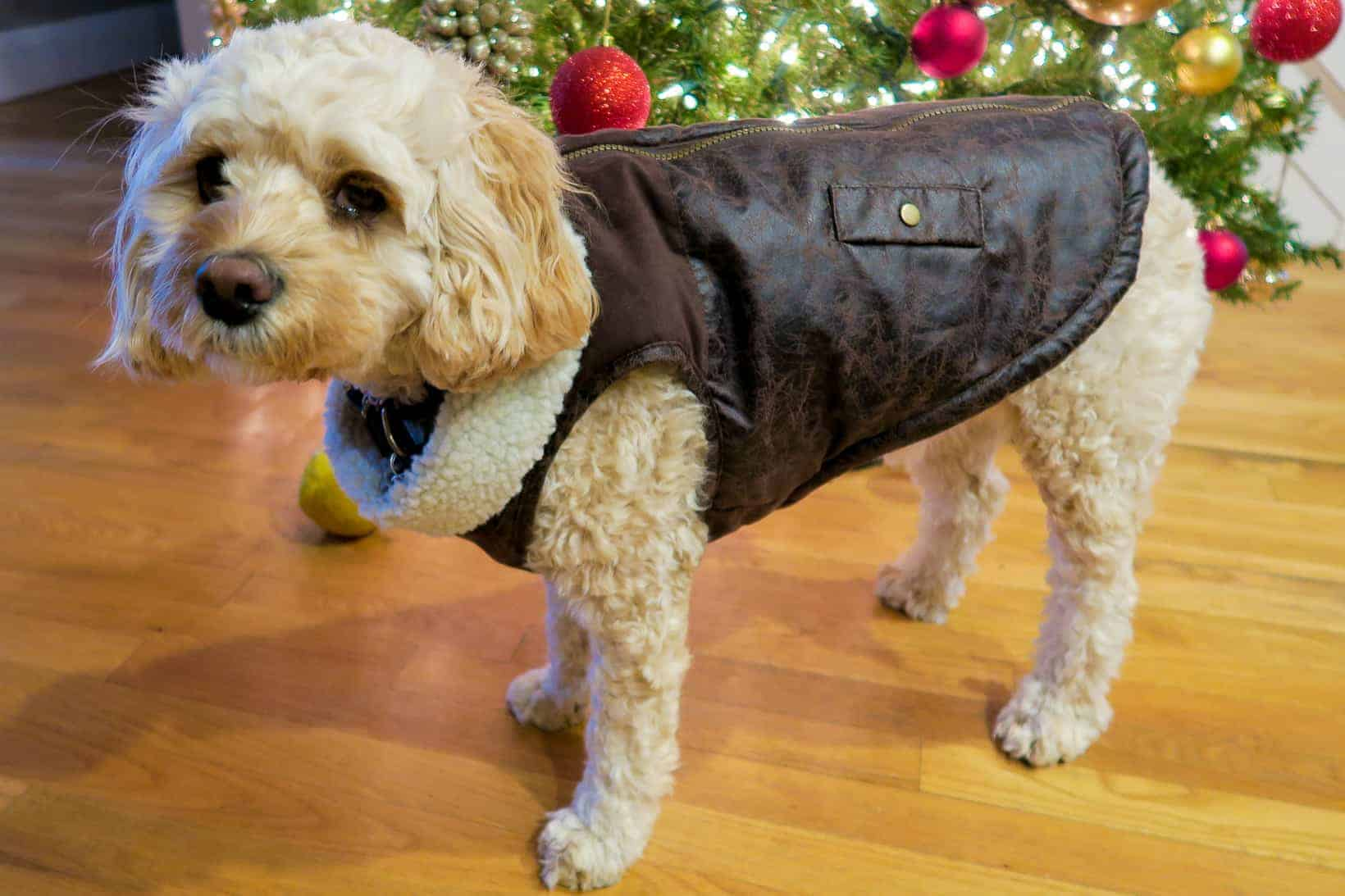 Outfits for your dog: Bomber Jacket by Bond & Co. The perfect outfit for any dog who wants to be cool.