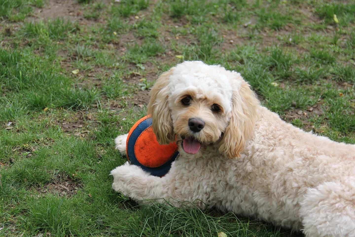 Gifts for Dog Lovers - written by a dog lover